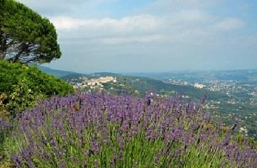 View past the lavenders towards Cabris